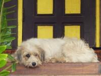 Temple dog, Ban Houa Done Deng