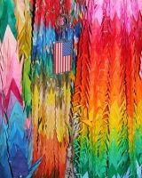 450295544265029-Paper_birds_.._York_City.jpg