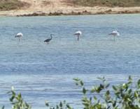 A'Dahariz lagoon
