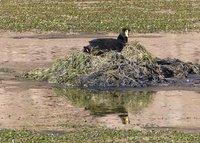 4_107_Atac..na_wetlands.jpg