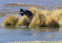 4_108_Atac..na_wetlands.jpg