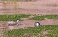 4_111_Atac..na_wetlands.jpg