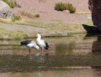 4_112_Atac..na_wetlands.jpg