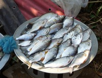 River fish for sale