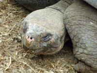 Charles Darwin Research Centre: Giant Tortoise - Puerto Ayora, Santa Cruz