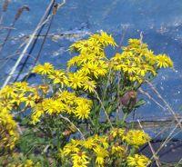 6324151-Old_boat_flowers_Lindisfarne.jpg