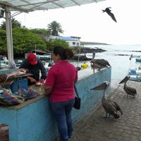 6444820-Shopping_for_fish_Puerto_Ayora.jpg