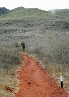 6461845-The_red_trail_Isla_Rabida.jpg