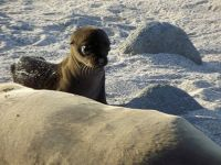 6471653-Sea_lion_pup_North_Seymour_Ecuador.jpg
