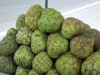 6497660-Custard_apples_Otavalo.jpg
