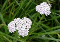 7156931-Flowers_in_the_dunes_Alnmouth.jpg