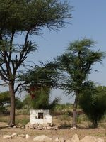 7536735-Family_shrine_Jaisalmer.jpg