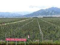 Kosan state apple farm near Wonsan