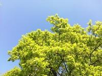Oak tree in Walpole Park