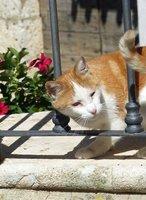 Friendly cat in Arco, Arpino