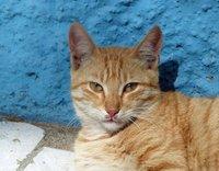 Friendly cat, Gamboa, Praia