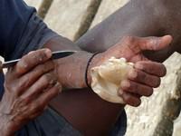 Cleaning a shell, Santa Maria pier