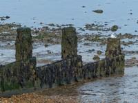 Beach at Tankerton, Whitstable