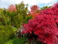 In the Rock Garden, Emmetts Garden
