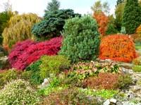 The Rock Garden, Emmetts Garden