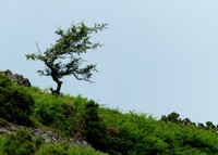 In Cardingmill Valley
