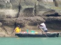Fishing for shellfish, Bai Tu Long Bay