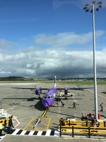 Purple FlyBe