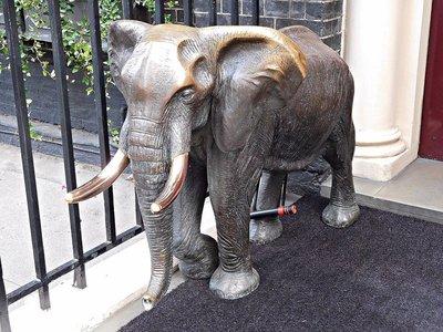 CURZON STREET: Elephant at Aspinalls