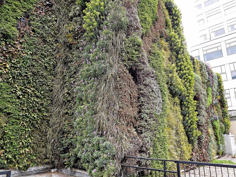The Green Wall: detail