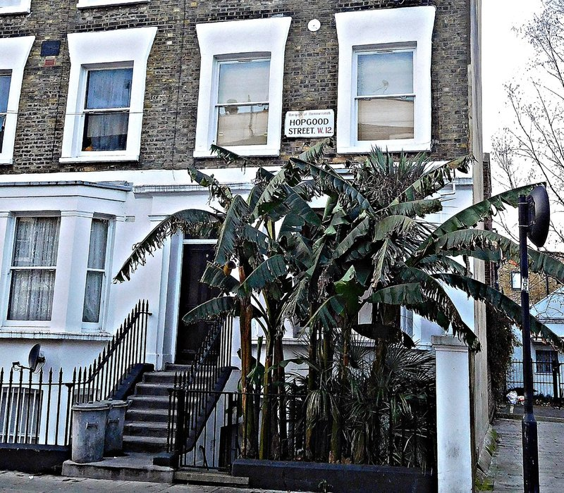 Palms Hopwood Street