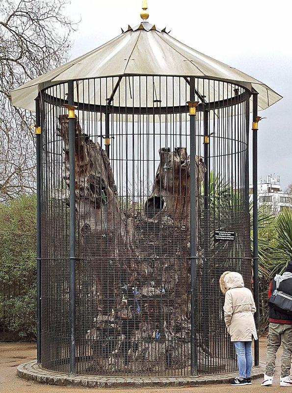 Elfin Oak Kensington Gardens