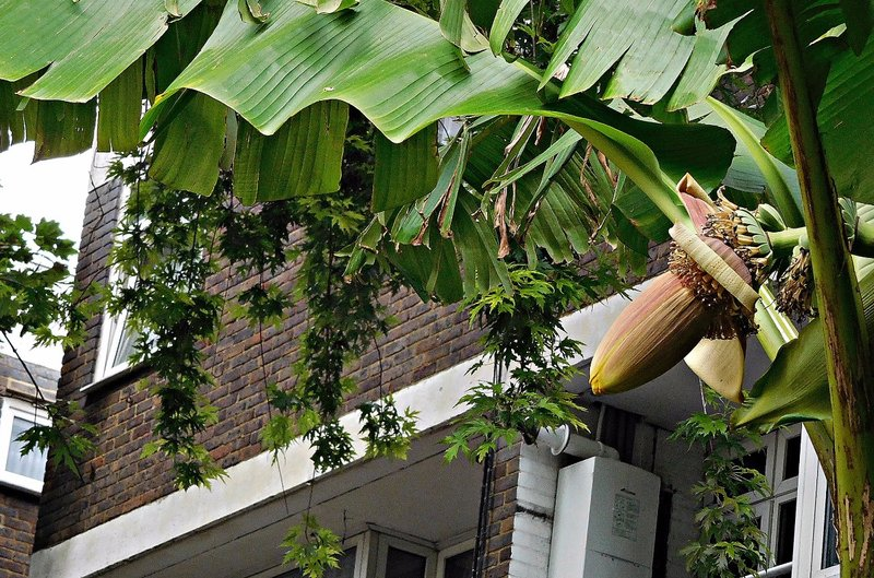 Banana flower Columbia Road