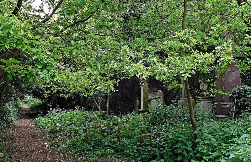Abney Park: a leafy alley