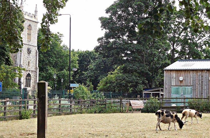 Stepney City Farm and St Dunstans Church