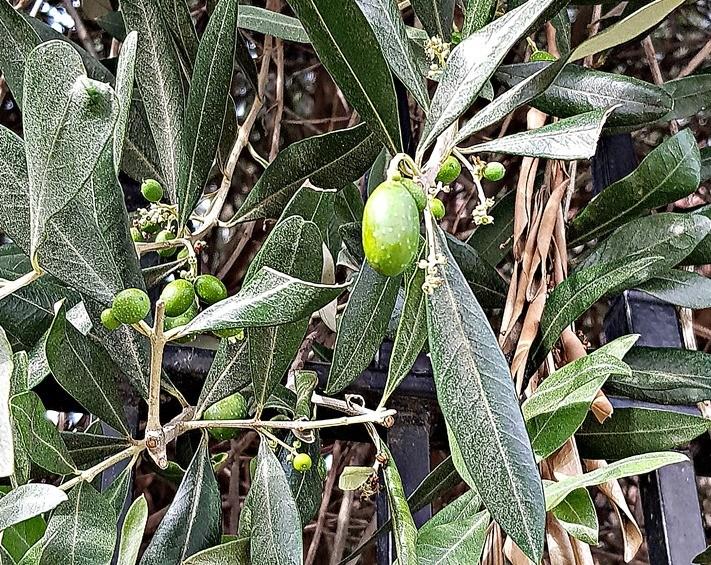 Olives near Portobello Road