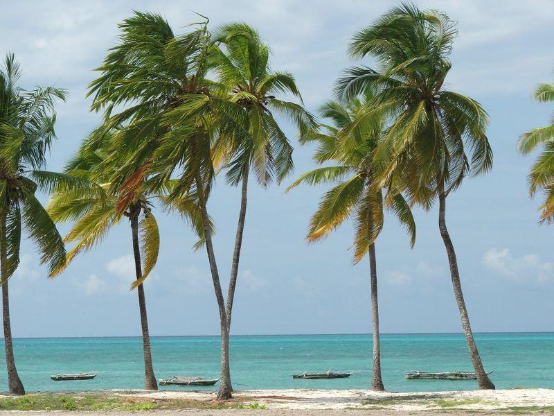 large_854253916952585-ZANZIBAR_AS_..bar_Island.jpg