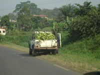 On the road on Bioko Island