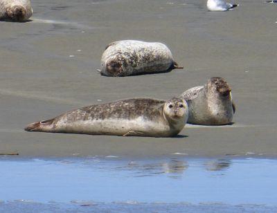 194279676792903-Seals_Restin..k_Cuxhaven.jpg