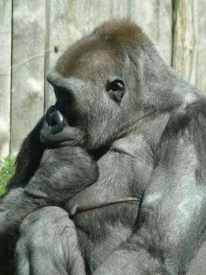 4912206-Zoo_Faces_Muenster.jpg