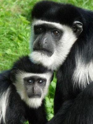 4912207-Zoo_Faces_Muenster.jpg