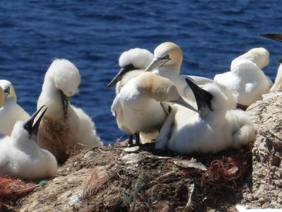 567456826791519-Bird_Rock_1_.._Helgoland.jpg