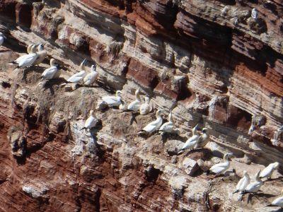 6791530-Bird_Rock_2_Seagulls_Helgoland.jpg