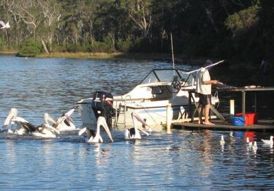 Photographing Pelicans On Walpole Inlet