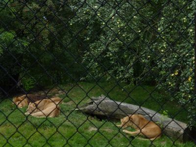 7173106-Animals_at_the_Zoo_Wroclaw.jpg