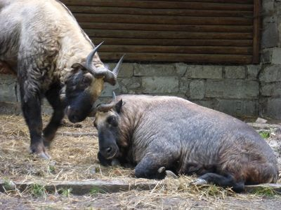 7173109-Animals_at_the_Zoo_Wroclaw.jpg