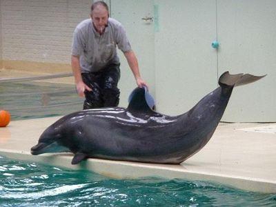 906871374912233-Dolphin_Nand..r_Muenster.jpg
