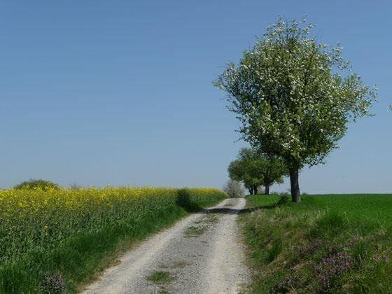 large_368078904919013-A_trail_in_t.._Gochsheim.jpg
