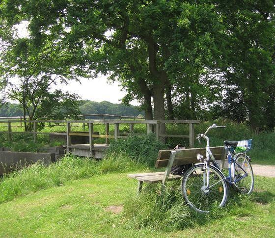 large_3907241-Bike_Rides.jpg