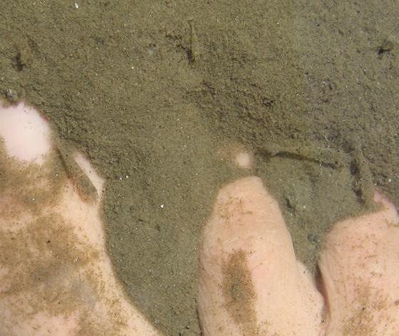 large_4095411-Something_Tickling_Your_Feet.jpg