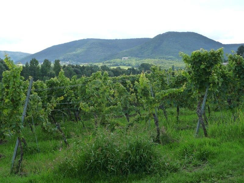 large_427884845823678-Vineyards_ne..land_Pfalz.jpg